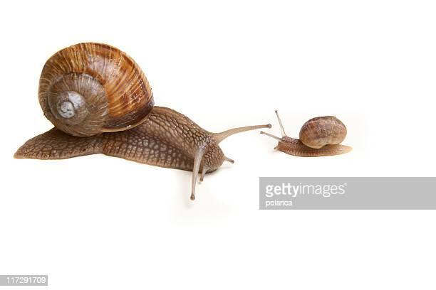 Snail series