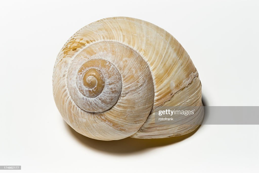 Snail shell   (image size XXXLarge)