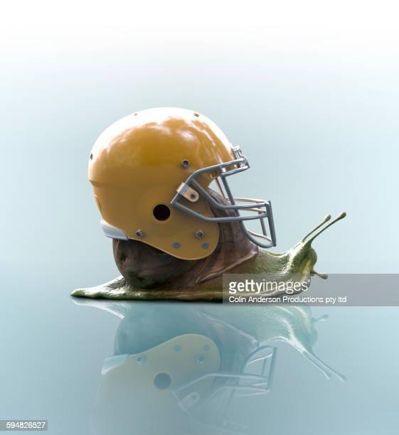 Snail wearing football helmet on shell