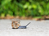 Slow snail moving with a surreal home on his back.