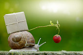 Snailmail, snail with package on the snail shell, Express