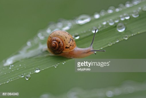 Snails crawling onto the grass : Stock Photo