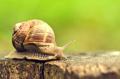 Clambering, Vietnam, Escargot, Snail, Slow Motion
