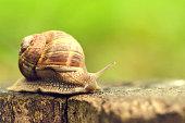 Clambering, Vietnam, Escargot, Snail, Slow Motion