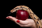 Female holding red apple and snake, photographed over black background. [url=file_closeup.php?id=16113715][img]file_thumbview_approve.php?size=1&id=16113715[/img][/url] [url=file_closeup.php?id=161137