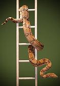 Snake and ladder #3