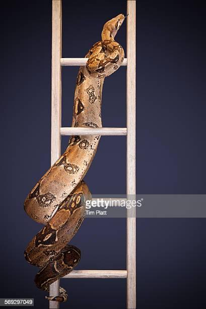 Snake and ladder #2