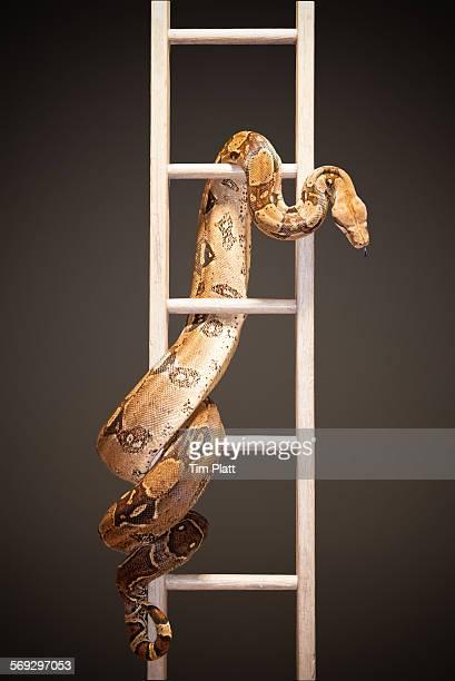 Snake and ladder #1