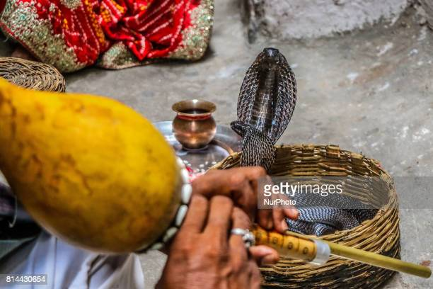 A snake charmer play flute 'Been' in front of snakes during the worship of 'Naag' on the occasion of 'Naag Panchami' in Jaipur Rajasthan India on...