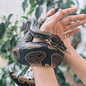 Animal Skin, Hand, Human Hand, Springtime, Summer