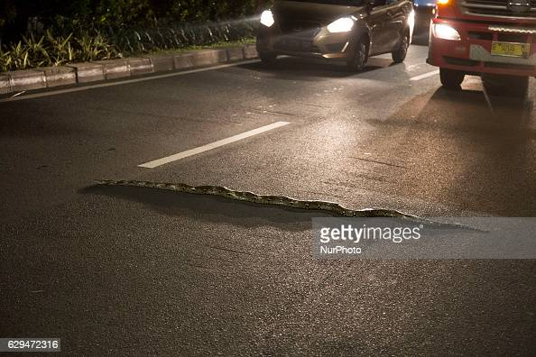 A snake phython type found on the street at Halim Jakarta Indonesia on 8 December 2016 The snake stuck on the street causing a little traffick but...