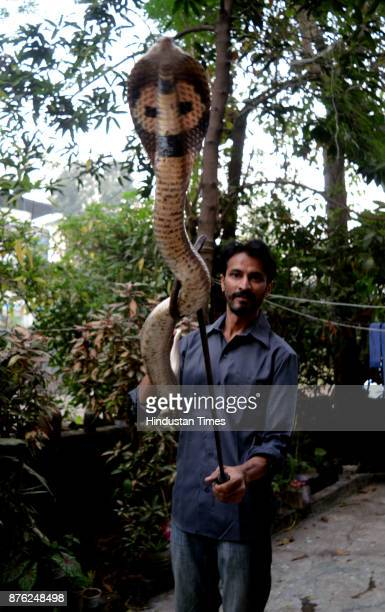 Snake rescuer Dinesh Ghohil rescue 3 baby spectacle cobras 2 adult size cobras 3 baby Russell's vipers and one scorpion in last two days on November...