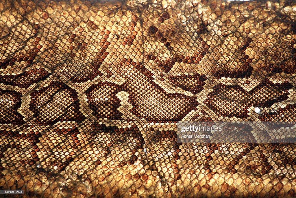 Snake Skin : Stock Photo