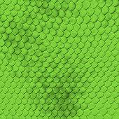 Snake skin, detail.