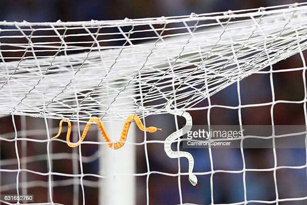 Snakes are seen hanging from the goal of Vedran Janjetovic of the Wanderers during the round 15 ALeague match between Sydney FC and the Western...