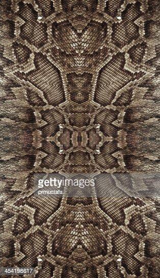 Piel de serpiente : Foto de stock