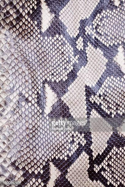 Snakeskin up close