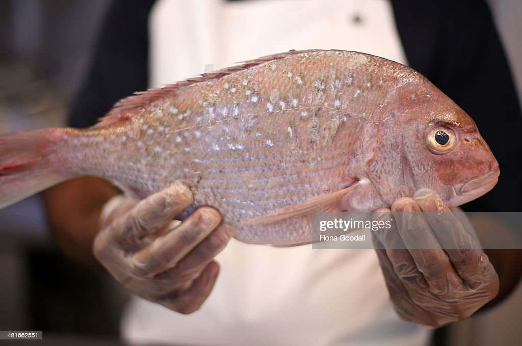 A snapper is pictured at an Auckland fish market on March 31, 2014 in Auckland, New Zealand. From April 1, 2014 recreational fishermen on part of the east coast of New Zealand's North Island can take only seven snapper a day down from the previous limit of nine. The minimum size has also increased from 27cm to 30cm.