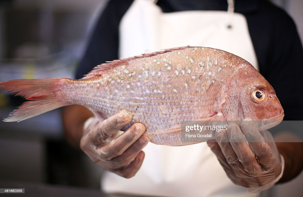 A snapper is pictured at an Auckland fish market on March 31 2014 in Auckland New Zealand From April 1 2014 recreational fishermen on part of the...