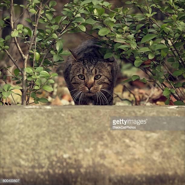 Sneaking