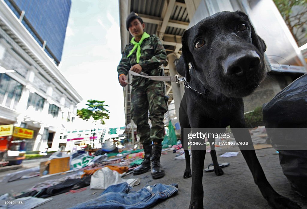 A snifer dog checks security at anti-government main protest area in Bangkok on May 21, 2010. Thailand picked up the pieces after violence and mayhem triggered by a crackdown on anti-government protests, as the focus swung to recovery and reconciliation in a divided nation.