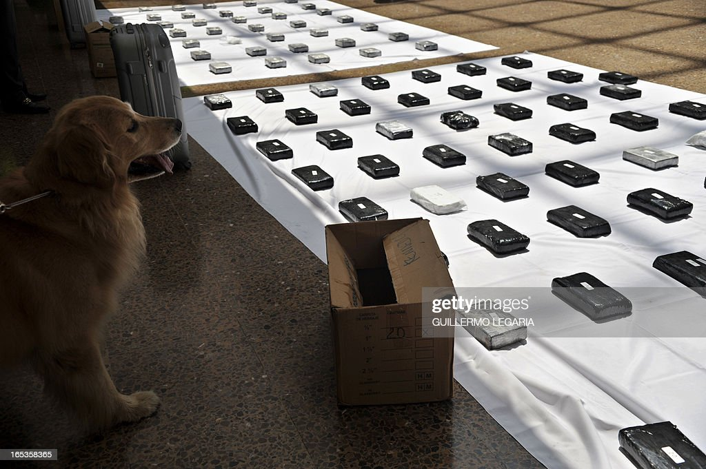 A snifer dog stands next to packages containing 102 kgs of cocaine while being presented to the press in the Police heaquarters in Bogota, on April 3, 2013. The drug was seized in a house in the Bogota's neighborhood of Kennedy, and was ready to be marketed in Bogota and also be sent to Eldorado International Airport of Colombian capital, authorities said. AFP PHOTO/Guillermo Legaria