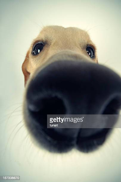 Sniffing, Snif