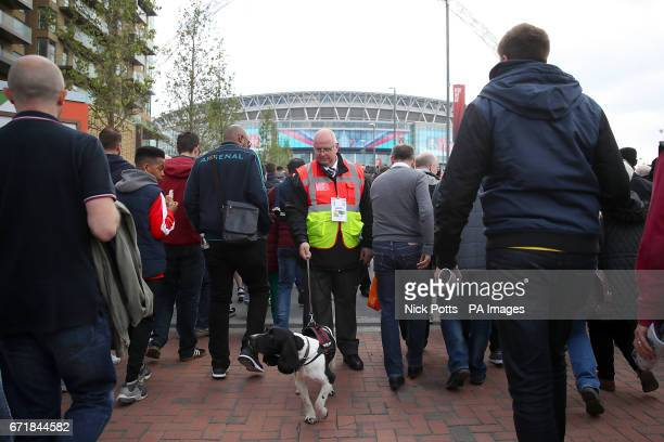 Sniffer dogs on Wembley Way prior to the Emirates FA Cup Semi Final match at Wembley Stadium London