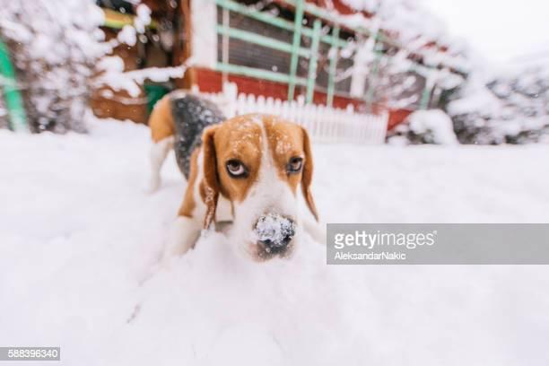 Snooping around on the snow