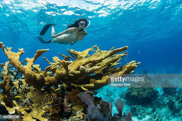 Snorkeler and Elkhorn Coral (Acropora palmata).