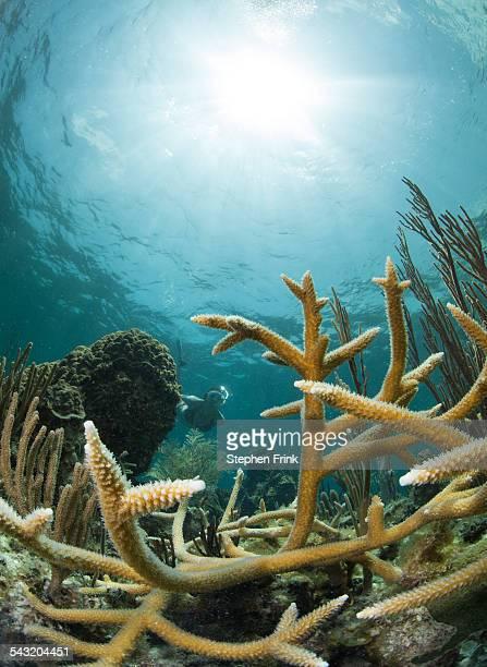 Snorkeler framed by hard coral.