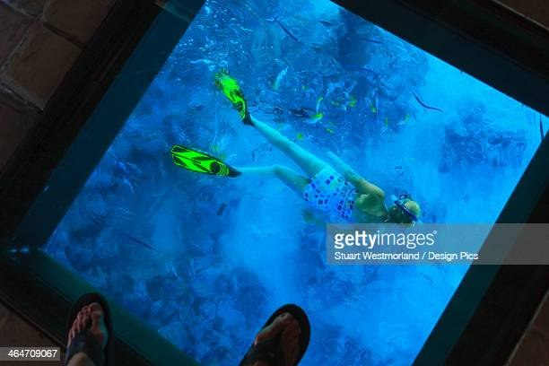 Snorkeler Under The Glass Floor In A Room Of Bora Bora Nui Resort And Spa
