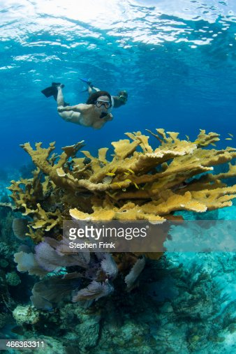 Snorkelers and Elkhorn Coral (Acropora palmata).