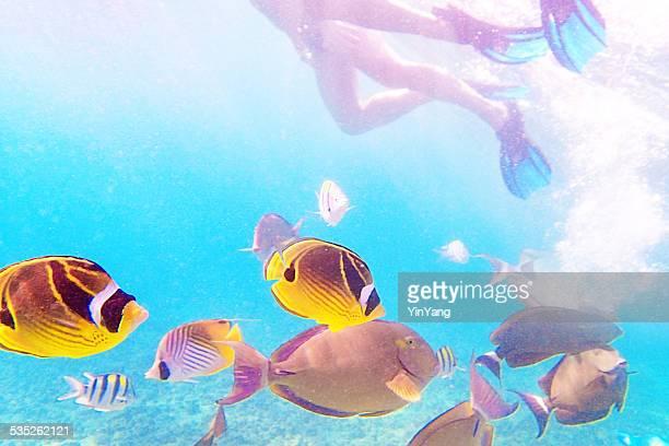 Les plongeurs avec un choix de poissons de récif Tropical à Kauai, Hawaï