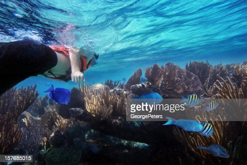 Snorkeling And Caribbean Reef With Fish