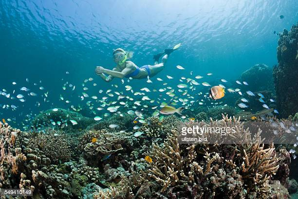 Snorkeling at Bali Amed Bali Indonesia