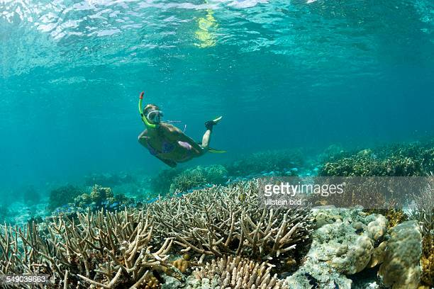 Snorkeling at shallow Coral Reef Micronesia Palau