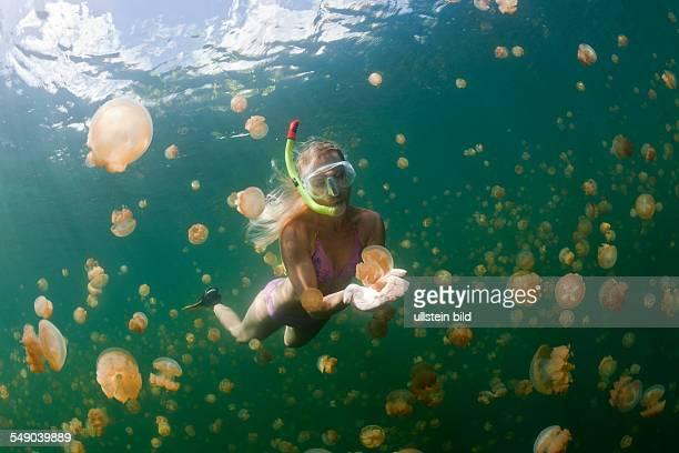 Snorkeling in Jellyfish Lake Mastigias papua etpisonii Jellyfish Lake Micronesia Palau