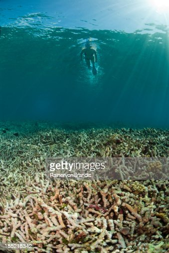 snorkeling over degraded coral reef