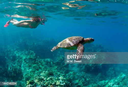 Snorkeling vacation : Stock Photo