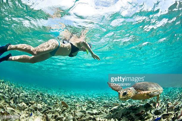 La plongée avec masque et tuba avec Tortue de mer