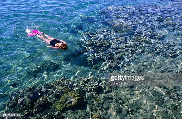 Snorkeller looking at reef, Aqaba, Jordan