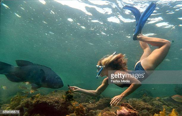 Snorkeller Olivia swimming with Bluey the blue groper at Clovelly 24 October 1997 AFR Picture by JAMES ALCOCK