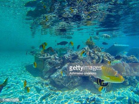 Snorkelling in Bora Bora