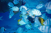 Snorkelling with colourful fish.