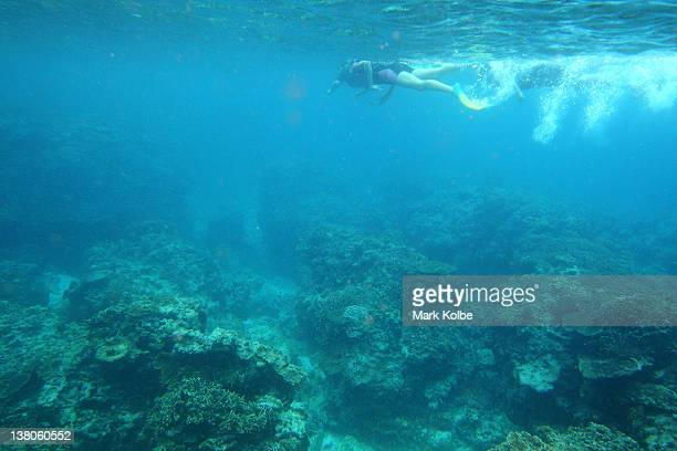 Snorklers are seen exploring the reef on January 14 2012 at Lady Elliot Island Australia Lady Elliot Island is one of the three island resorts in the...