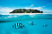 Group of zebra fishes swimming in the sea. Combined underwater and surface view. Background: Blurred Mnemba island which is part of Zanzibar Archipelago (Tanzania, Africa),