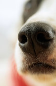 Snout of dog in close-up