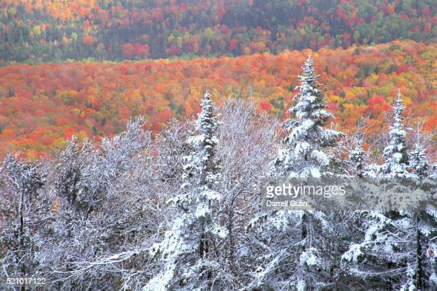 Snow and Autumn Colors in a Forest