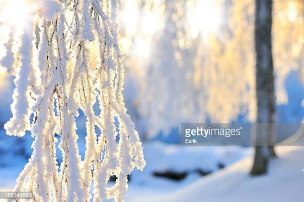 Schnee und frost bedeckt Filialen
